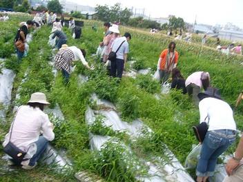 20090705yanamori_manganjibatake