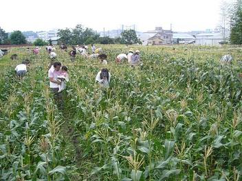 20090705yanamori_toumorokosibatake